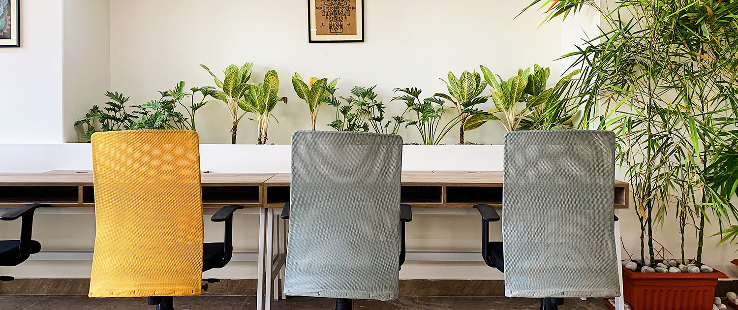 Indoor Plants not only improve the air quality but ensure you have an amazing work space to work from